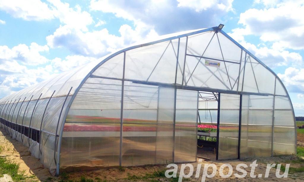 Промышленная фермерская теплица Oriente RUS - МОСКВА