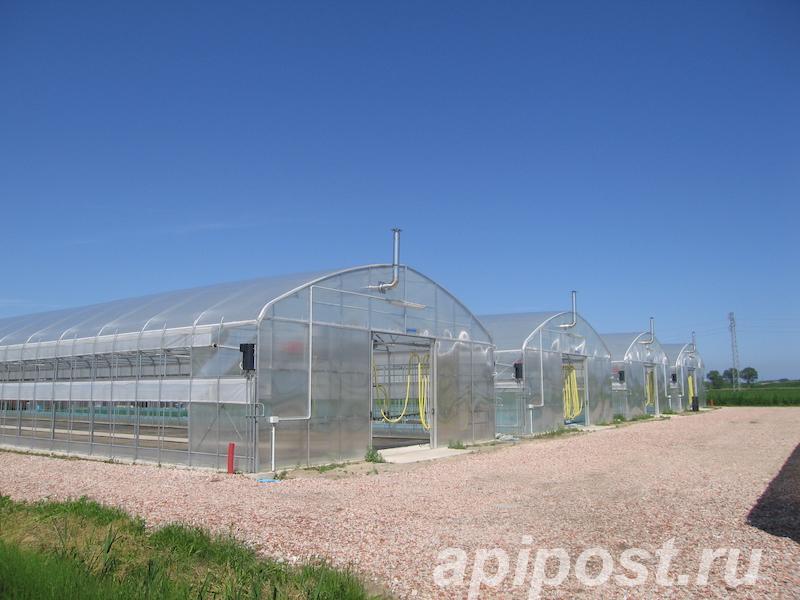 Теплица промышленная фермерская Atlantic - МОСКВА