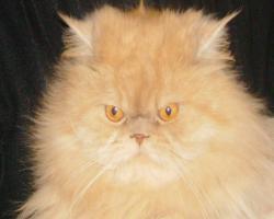 Коты-кошки на передержку.