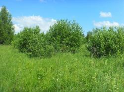 Продам участок 40 сот, земли поселений (ИЖС)
