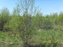 Продам участок 15 сот, земли сельхозназначения (СНТ, ДНП)