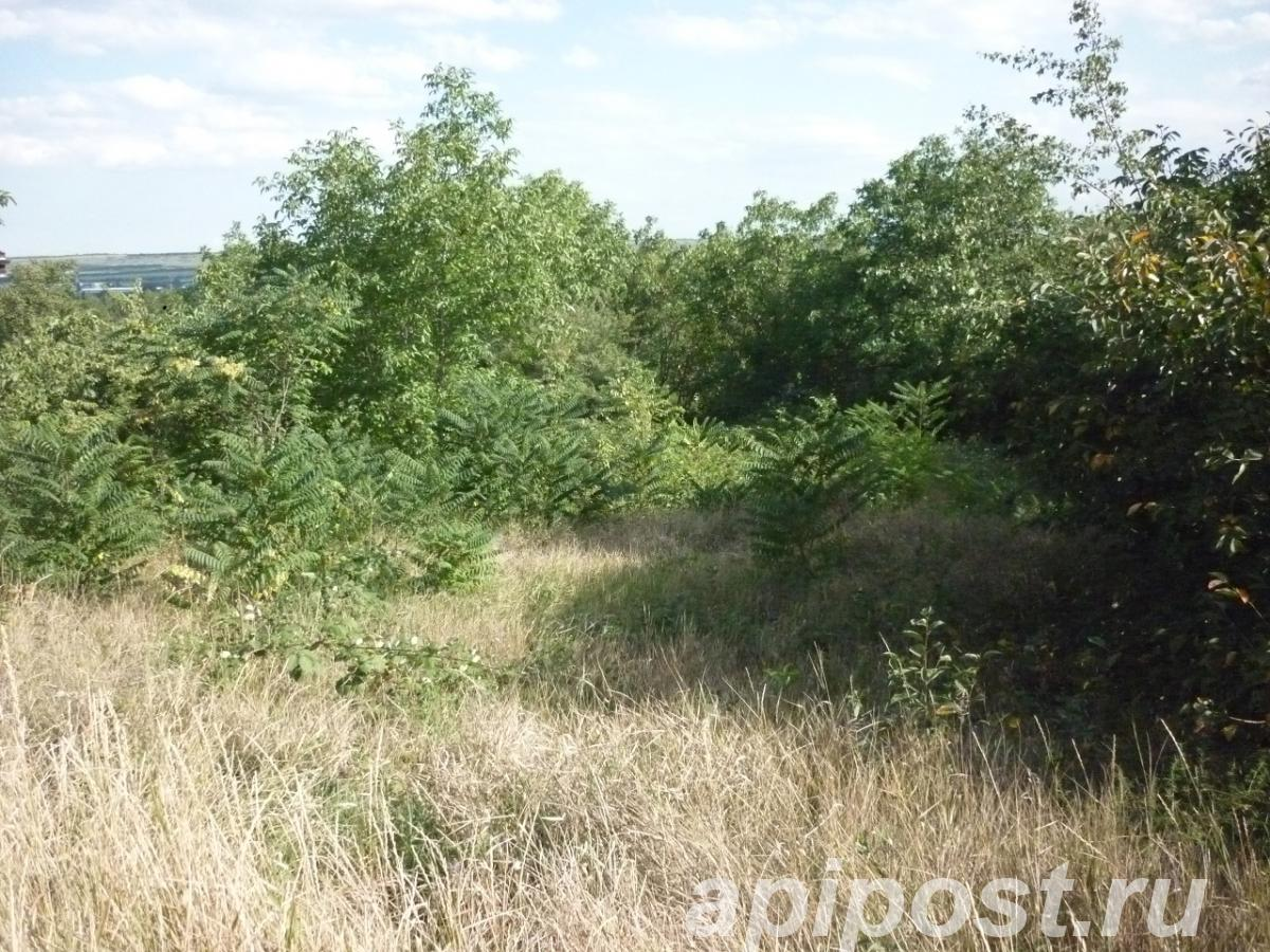 Продам участок 6 сот, земли сельхозназначения (СНТ, ДНП) - Пятигорск