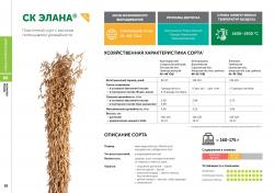 Семена сои сорт СК Элана селекции Компании Соевый комплекс