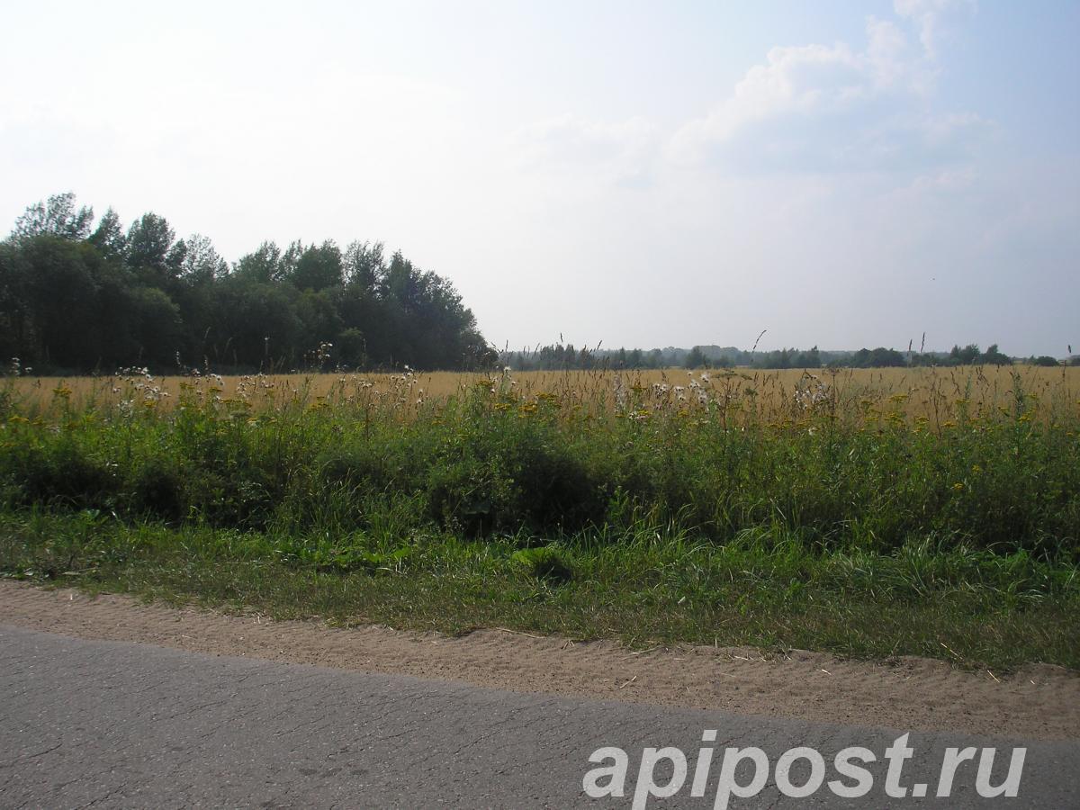 Сдам участок 500 сот, земли сельхозназначения (СНТ, ДНП) - ТВЕРЬ