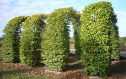 Арка способная выдержать вес разросшихся растений.