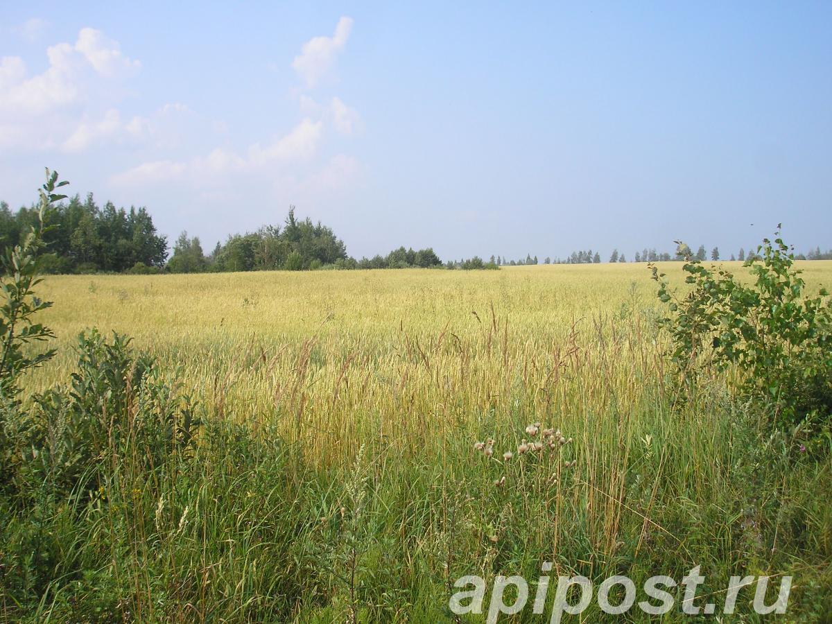 Продам участок 500 сот, земли сельхозназначения (СНТ, ДНП) - ТВЕРЬ