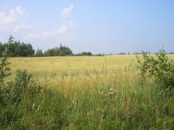 Продам участок 500 сот, земли сельхозназначения (СНТ, ДНП)