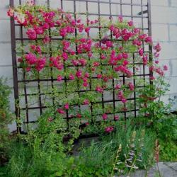 Шпалера способная выдержать вес разросшихся растений.